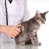 Ветеринарные клиники в Сямже